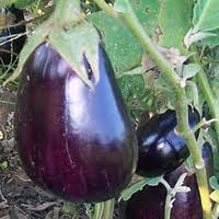 Eggplant_4eb9c0fc142bd