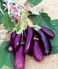 Eggplant___leban_4eb8d314218de