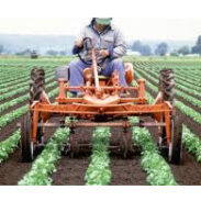 Organic Pest Controls and Fertilizer