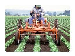 Organic Pest Controls and Fertilizer