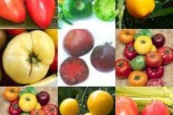 Tomato___selecti_4ec882850cdf8