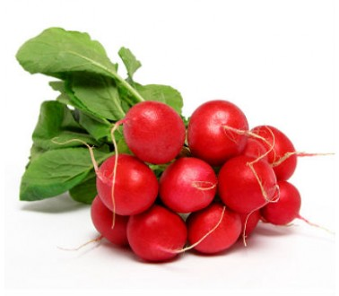 review of related literature of radish as pesticide Texas a&m university - academic analyses and information on horticultural crops ranging from fruits and nuts to ornamentals, viticulture and wine.