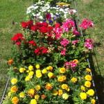 slider1 flowers